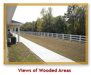 View of Wooded Areas
